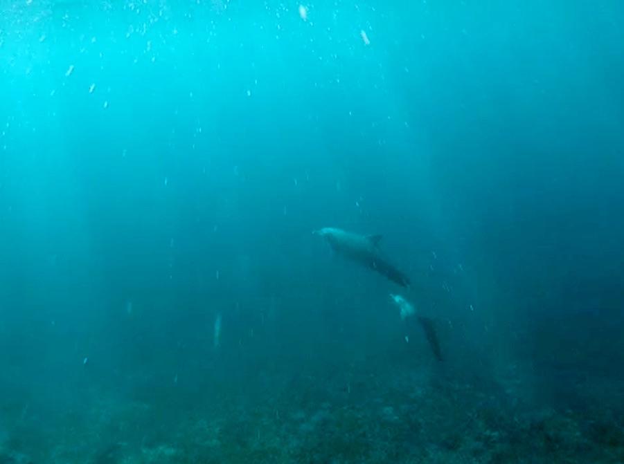 Mawan Island snorkelling komodo dolphin pod mother baby
