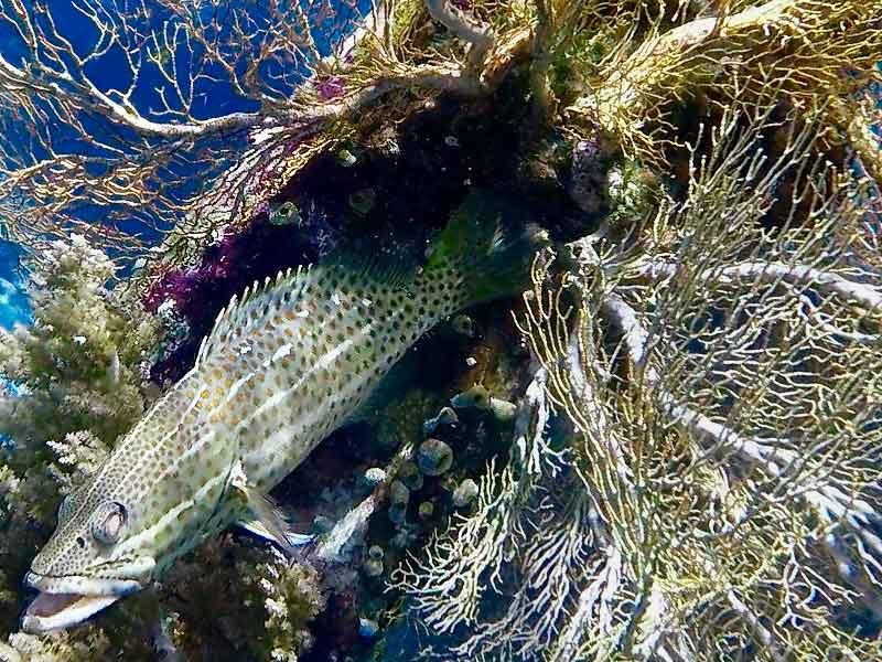Raja Ampat snorkelling fan coral fish