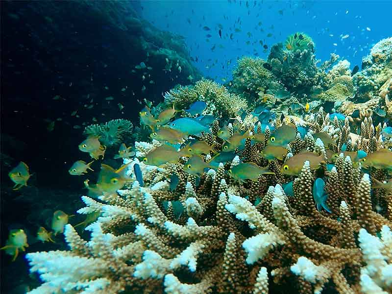 Adrians Cove Diving Padre Burgos Coral Reef Fish