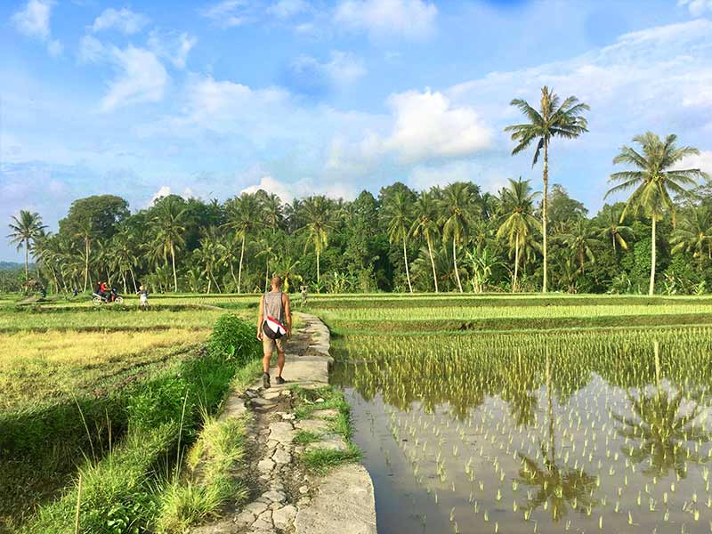 Rice Fields North Ubud Bali
