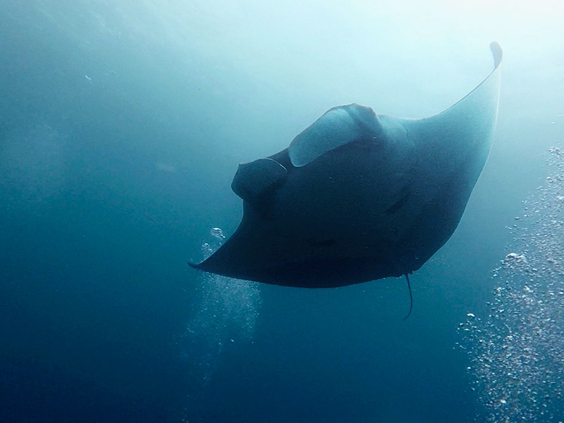Diving with Oceanic Mantas in Blue Magic Raja Ampat