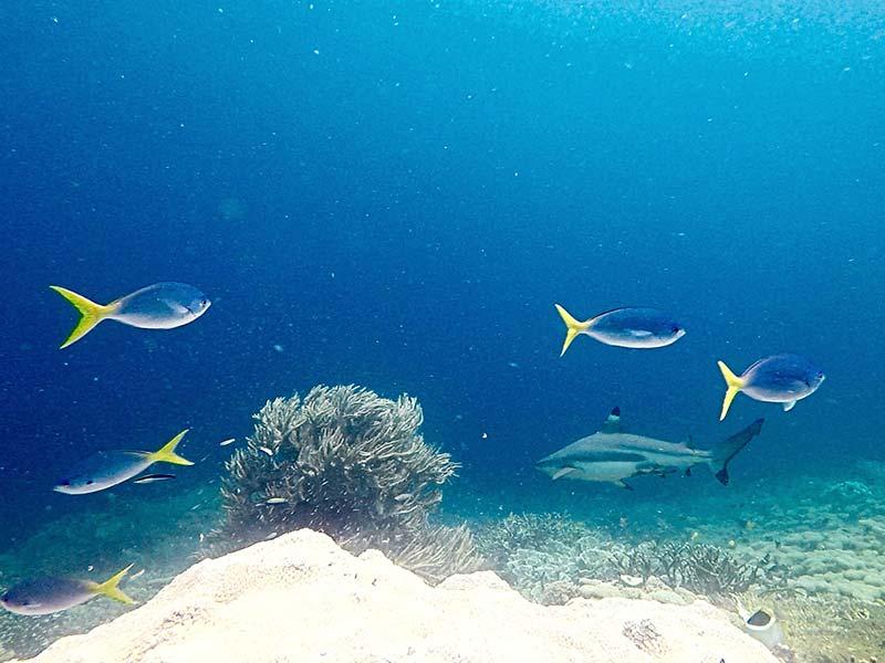 arborek snorkelling