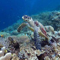 Turtle paradise: snorkelling in Bunaken